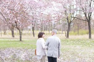 桜の中を歩くシニアカップルの写真素材 [FYI04675210]