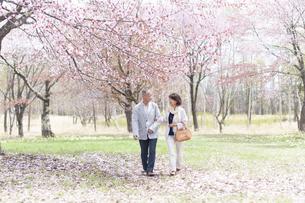 桜の中を歩くシニアカップルの写真素材 [FYI04675212]