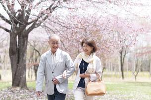 桜の中を歩くシニアカップルの写真素材 [FYI04675213]