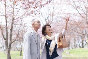 桜を見上げるシニアカップルの写真素材 [FYI04675214]