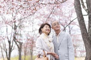 桜を見つめるシニアカップルの写真素材 [FYI04675216]