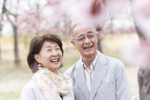 桜の前で微笑むシニアカップルの写真素材 [FYI04675217]