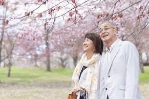 桜の中で微笑むシニアカップルの写真素材 [FYI04675218]