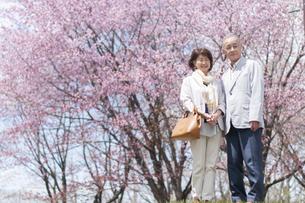 桜の前で微笑むシニアカップルの写真素材 [FYI04675219]