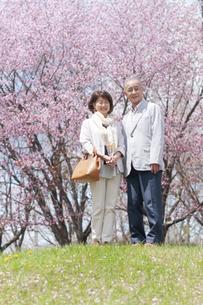 桜の前で微笑むシニアカップルの写真素材 [FYI04675220]