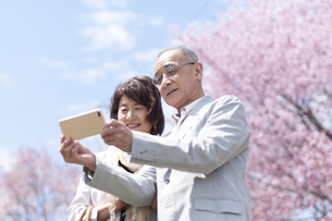 桜の前でスマホを見るシニアカップルの写真素材 [FYI04675223]