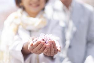 桜の花を手に乗せる女性の手元の写真素材 [FYI04675228]
