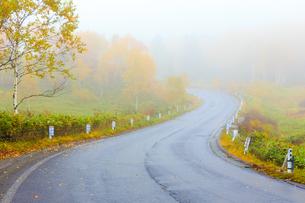 霧の中の道路の写真素材 [FYI04675327]