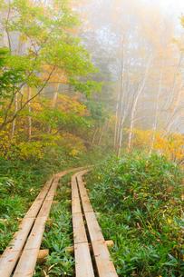 志賀高原の木道の写真素材 [FYI04675330]