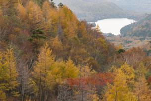 金精山登山口からの紅葉の写真素材 [FYI04675475]