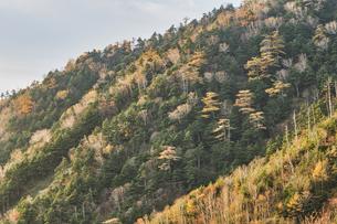 金精山登山口からの紅葉の写真素材 [FYI04675477]