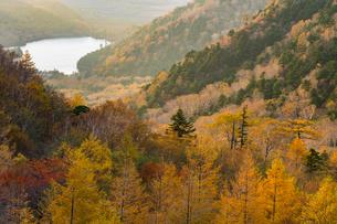 金精山登山口からの紅葉の写真素材 [FYI04675479]