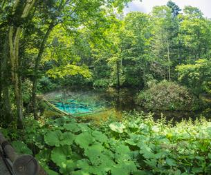 北海道 自然 風景 清里町 神の子池の写真素材 [FYI04675574]