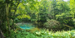 北海道 自然 風景 清里町 神の子池の写真素材 [FYI04675578]