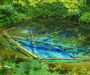北海道 自然 風景 清里町 神の子池の写真素材 [FYI04675584]