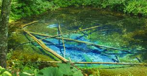 北海道 自然 風景 清里町 神の子池の写真素材 [FYI04675591]