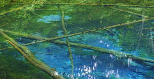 北海道 自然 風景 清里町 神の子池の写真素材 [FYI04675604]