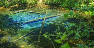 北海道 自然 風景 清里町 神の子池の写真素材 [FYI04675617]