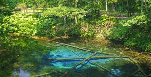 北海道 自然 風景 清里町 神の子池の写真素材 [FYI04675639]