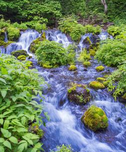 北海道 自然 風景  京極町 ふきだし公園の写真素材 [FYI04675679]
