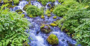 北海道 自然 風景  京極町 ふきだし公園の写真素材 [FYI04675680]