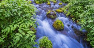 北海道 自然 風景  京極町 ふきだし公園の写真素材 [FYI04675683]