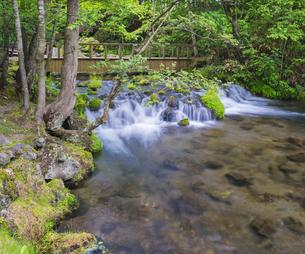北海道 自然 風景  京極町 ふきだし公園の写真素材 [FYI04675684]
