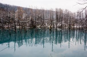 冬の初めの青い池の写真素材 [FYI04675813]