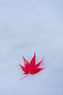 雪の上の赤いモミジの葉の写真素材 [FYI04675837]