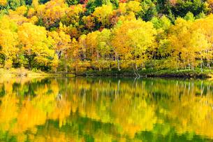 志賀高原木戸池の紅葉の写真素材 [FYI04676364]