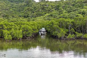 台風前にマングローブ林へ避難係留する観光船の写真素材 [FYI04676890]