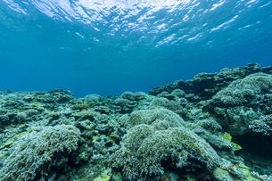 上野海岸沖合の珊瑚礁の写真素材 [FYI04676894]