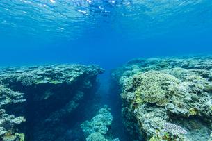 上野海岸沖合の珊瑚礁の写真素材 [FYI04676895]