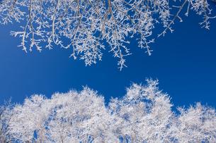 霧氷の写真素材 [FYI04677028]