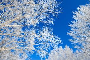 霧氷の写真素材 [FYI04677029]