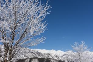 霧氷と白馬三山の写真素材 [FYI04677031]