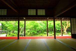 京都・圓光寺 十牛之庭の写真素材 [FYI04677065]