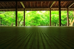 京都・圓光寺 十牛之庭の写真素材 [FYI04677066]