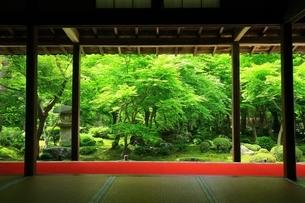 京都・圓光寺 十牛之庭の写真素材 [FYI04677069]