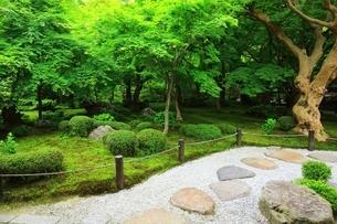 京都・圓光寺 十牛之庭の写真素材 [FYI04677070]