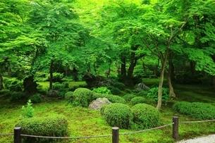 京都・圓光寺 十牛之庭の写真素材 [FYI04677071]