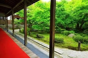 京都・圓光寺 十牛之庭の写真素材 [FYI04677072]