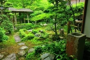 京都・圓光寺 本堂裏庭の写真素材 [FYI04677073]