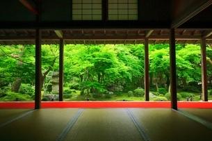 京都・圓光寺 十牛之庭の写真素材 [FYI04677076]