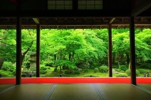 京都・圓光寺 十牛之庭の写真素材 [FYI04677077]