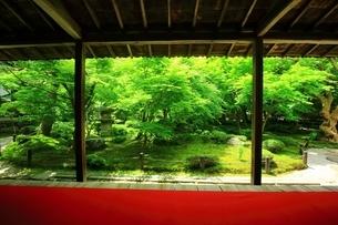 京都・圓光寺 十牛之庭の写真素材 [FYI04677079]