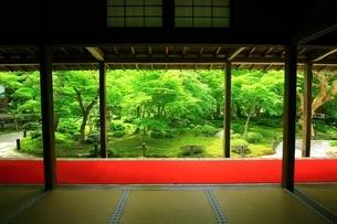 京都・圓光寺 十牛之庭の写真素材 [FYI04677080]