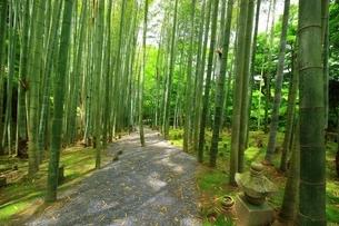 京都・圓光寺 応挙竹林の写真素材 [FYI04677082]