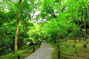 京都・圓光寺 十牛之庭の写真素材 [FYI04677085]