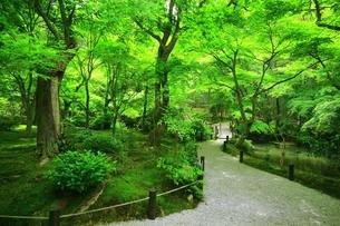京都・圓光寺 十牛之庭の写真素材 [FYI04677087]
